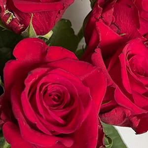 favorittroser-natures-red-favorittroser-floriss.jpg