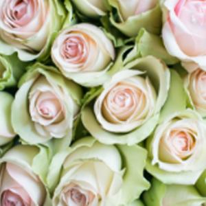 la-belle-favorittroser-floriss.jpg