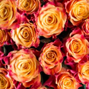 marry-haiko-favorittroser-floriss.jpg