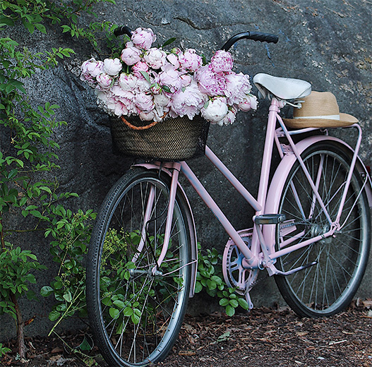 sarah-bernhardt-peoner-bukett-i-kurv-paa-sykkel.jpg
