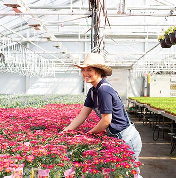 blomster-dyrket-i-norge-gartneri-blid-dame-plukker.jpg