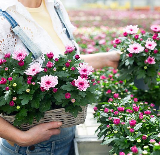 blomster-dyrket-i-norge-gartneri-blomster-i-kurv.jpg