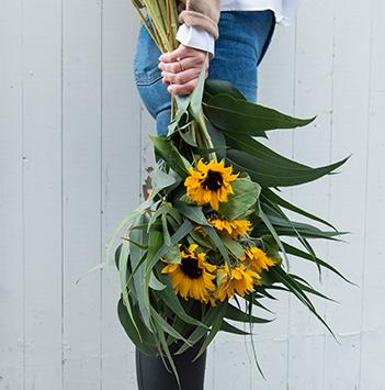 bievennlige-blomster-solsikkere.jpg