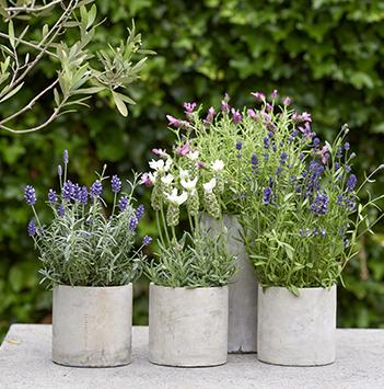 bievennlige-blomster-thejoyofplants-lavendel.jpg