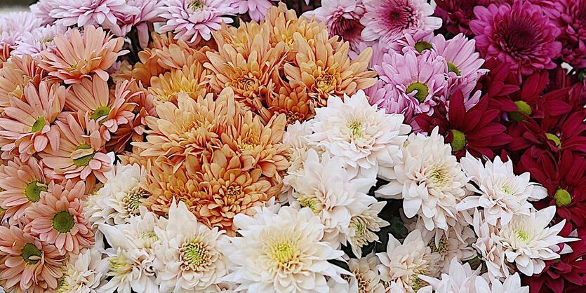 Slik får du blomstene<br/> til å vare lenge