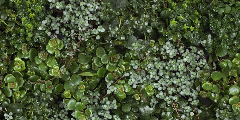 Slik innreder du med store<br/> grønne planter