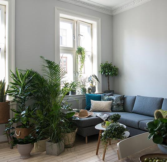 groenne-planter-dsc2337.jpg