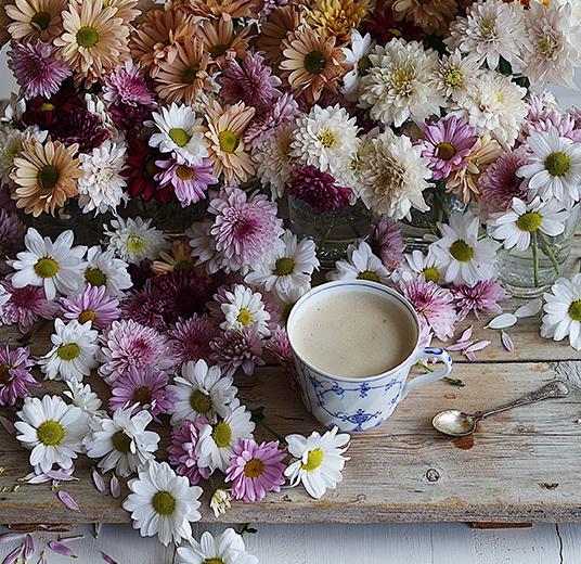 pynt paa-bordet-krysantemum-som-snittblomst-floriss.jpg