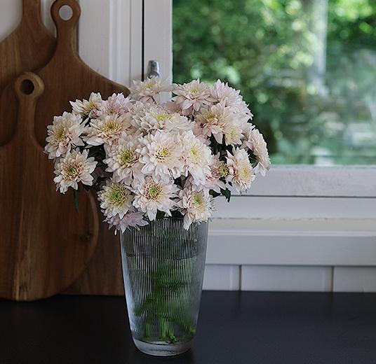 pyntet-i glassvase-krysantemum-som-snittblomst-floriss.jpg