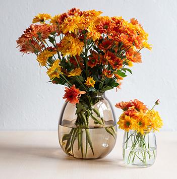 krysantemum-floriss.jpg