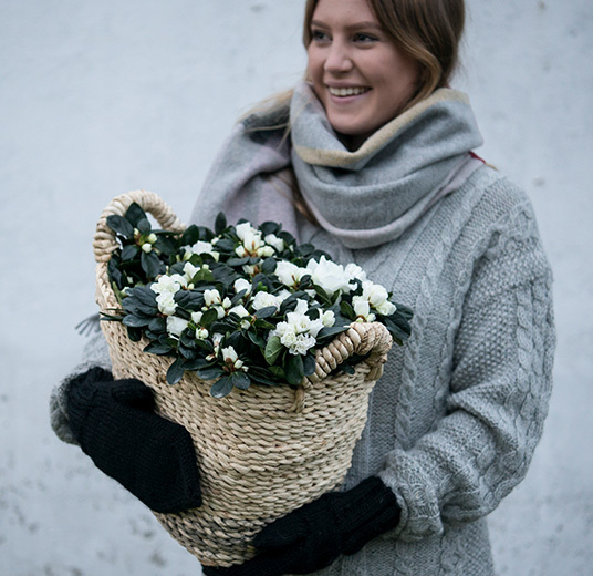 azalea-hvit-floriss-4.jpg