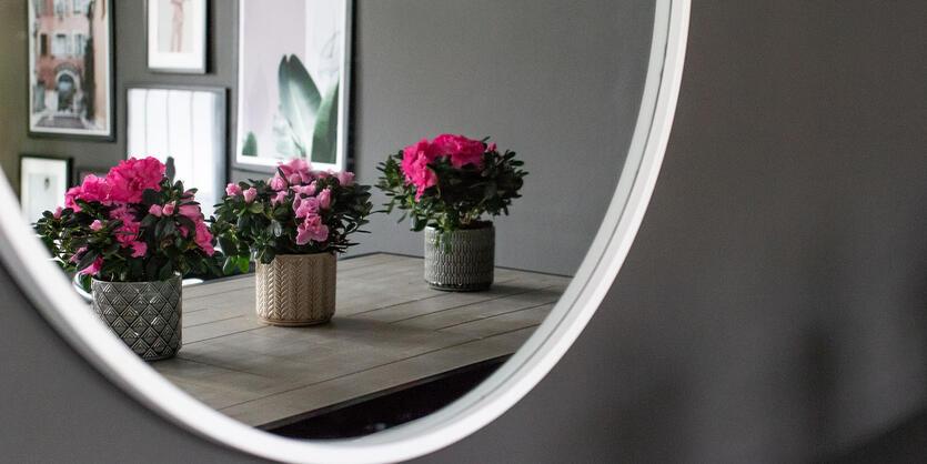 Gi hjemmet et fargerikt<br/> løft med azalea