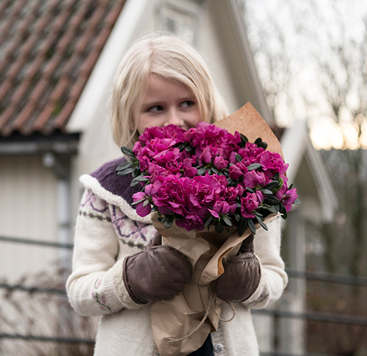 azalea-rosa-floriss-6.jpg