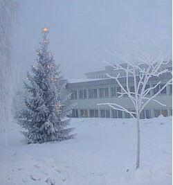 Juletre utenfor Vestby rådhus