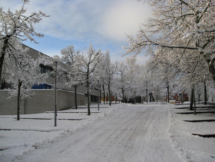 Rådhuset i vinterdrakt, med snø på trærne